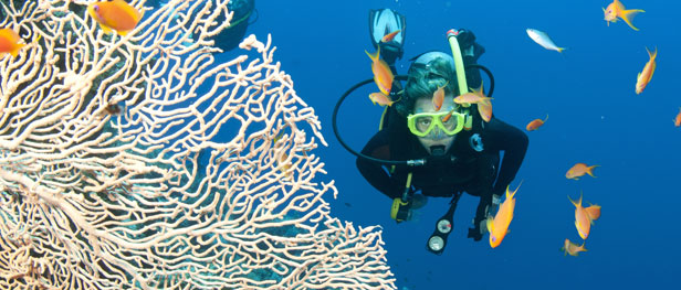 Great Barrier Reef Species Identification and Data Collection