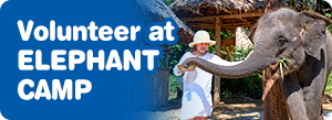 Volunteer at an Elephant Camp